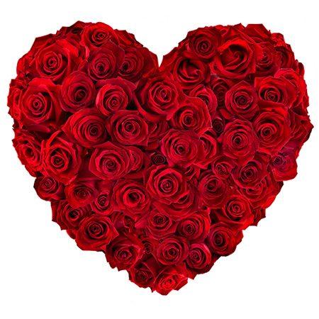 coeur roses rouges