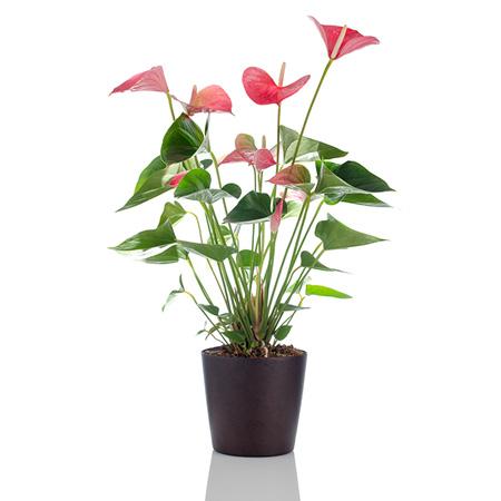 livraison plantes fleurs partout à Bruxelles