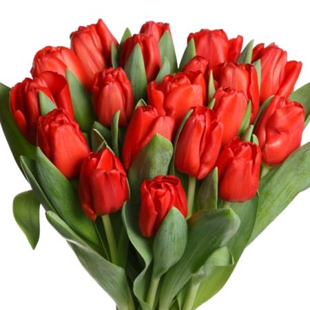 livraison de fleurs bruxelles uccle