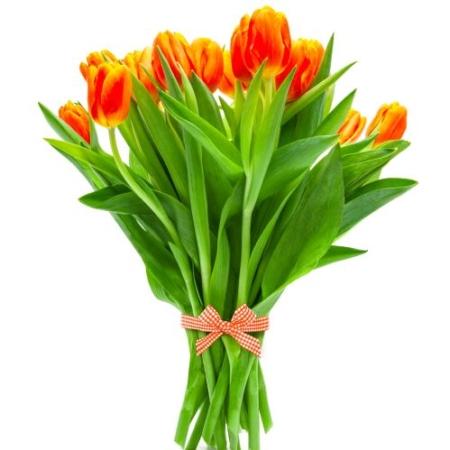 botanica livraison fleurs uccle bruxelles ixelles saint-gilles