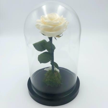 rose stabilisée livraison bruxelles
