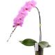 orchidée prestige uccle