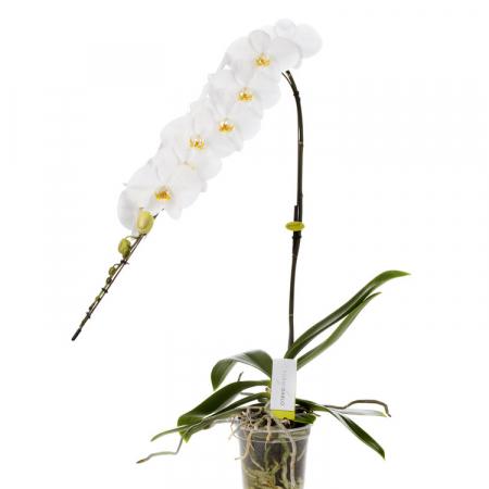 orchidée prestige à bruxelles
