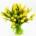 livraison tulipes jaunes bruxelles 1180 uccle ukkel brussel saint-gilles forest drogenbos anderlecht linkebeek sint-genius-rhode
