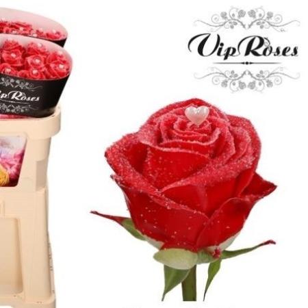 rose choco red love VIP roses livraison bruxelles saint valentin uccle