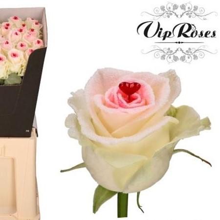 livraison roses saint valentin à bruxelles, uccle, ixelles, saint-gilles, fores, drogenbos, linkebeek, rhode-saint-genèse, etterbeek , schaerbeek, evere, ixelles, saint-gilles, anderlecht