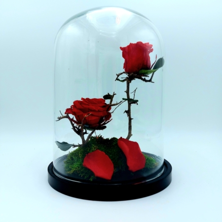 livraison de roses rouges à uccle bruxelles ixelles saint-gilles rhode-saint-genèse linkebeek drogenbos etterbeek boisfort auderghem evere schaerbeek