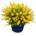 livraison plante bruxelles uccle saint-gilles ixelles evere rhode-saint-genèse drogenbos schaerbeek etterbeek anderlecht