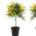 fleurs plantes printemps pâques disponible à uccle livraison partout à bruxelles