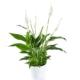 livraison plantes verte à bruxelles uccle Botanica artisan fleuriste
