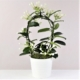 livraison plantes pour la fête des mères à bruxelles